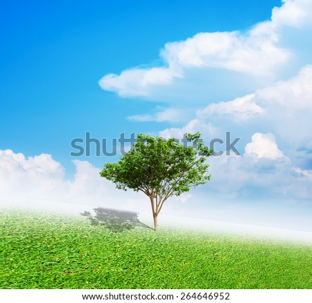 tree in  grass green  with sky - stock photo