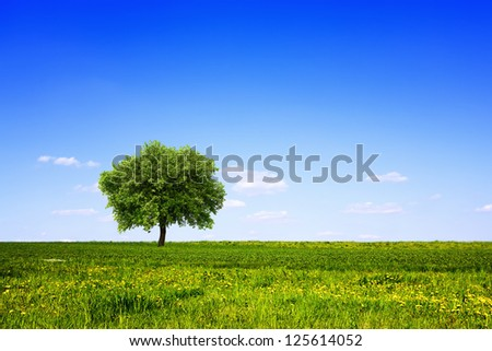Tree in green field and blue sky - stock photo