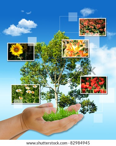 tree in hand as a gift with flower frame - stock photo
