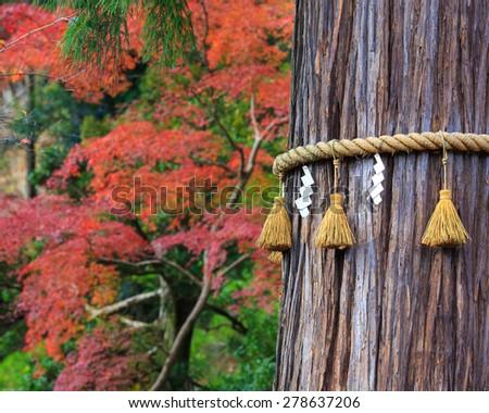 Tree in Japan Temple in the Autumn season - stock photo