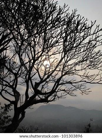Tree in laos. - stock photo