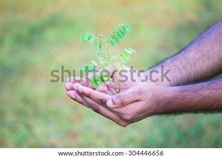 Tree in palm of hand in green field