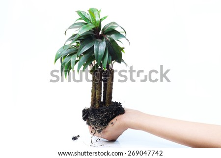 tree in palms as a gift - stock photo