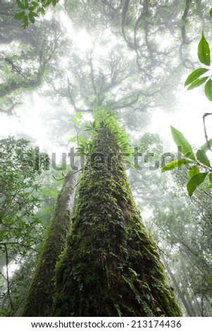 tree in rainforest at doi-intanont  national park, Chiangmai, Thailand - stock photo