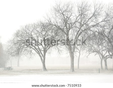 tree in snowy day - stock photo