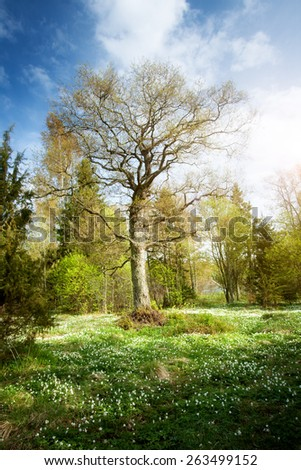 Tree in the forest in morning light with lots of flowers on the bottom - stock photo