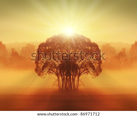 tree in the late summer with field - stock photo