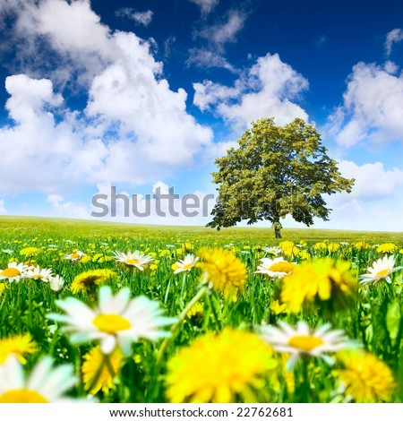 Tree in the meadow full of dandelions and camomiles - stock photo