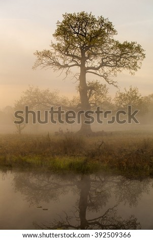 Tree in the meadow illuminated by the rising sun. - stock photo