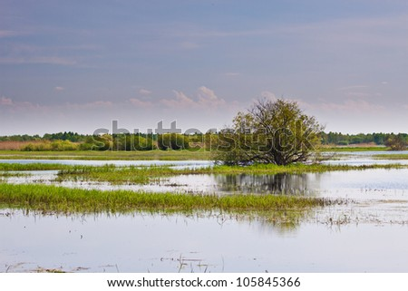 Tree in the middle of Biebrza swamps - stock photo