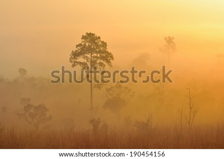tree in the mist - stock photo