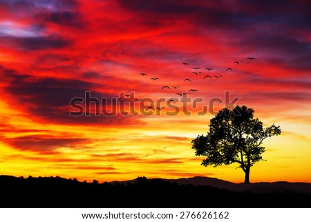 tree in the mountain - stock photo