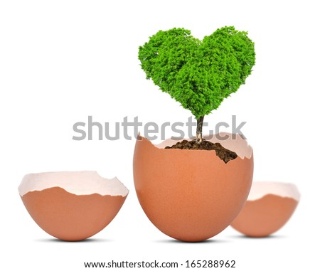 Tree in the shape of heart growing out of the egg isolated on white.New life concept.