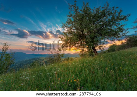 Tree in the sunset rays at Carpathian mountain slopes. - stock photo