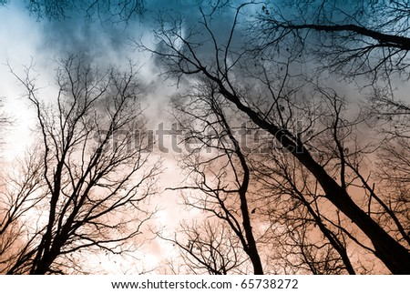 Tree in the sunset with a bright orange background / Collection from Gerecse mountains, Hungary