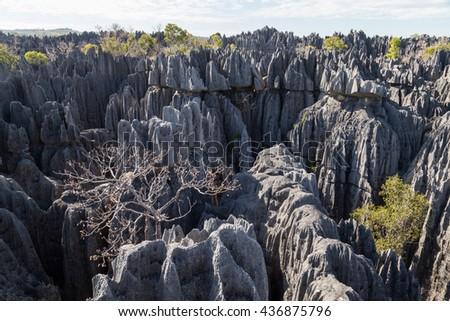Tree in Tsingy de Bemaraha National Park, Madagascar - stock photo