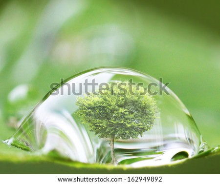 tree in water drop on the leaves  - stock photo