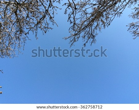Tree in winter and blue sky - stock photo