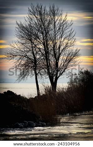 Tree in winter time at Lake Balaton, Hungary - stock photo