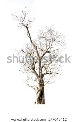 Tree isolate on a white background