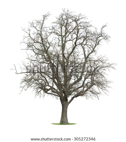 Tree Isolated in a white background - stock photo