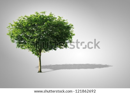Tree isolated on a Gray background - stock photo