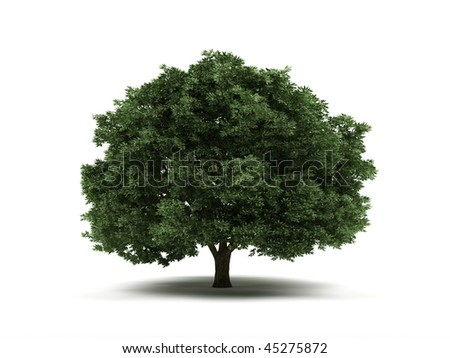 Tree isolated on a white background.