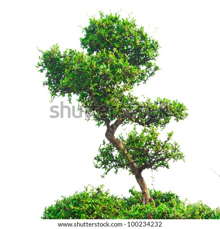 Tree isolated on the white background - stock photo