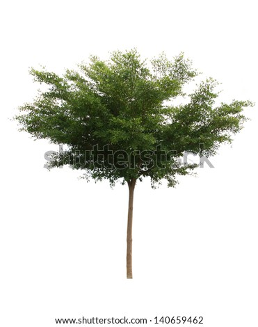 Tree isolated on white background