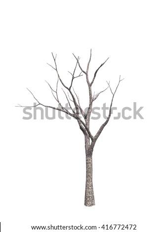 tree isolated white background - stock photo