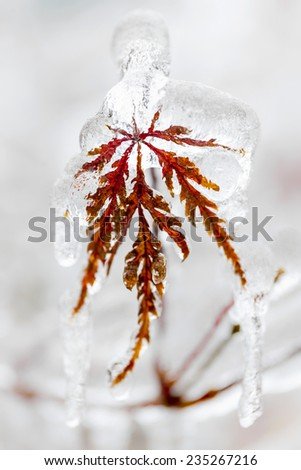 Tree leaf covered in ice and icicles during winter - stock photo