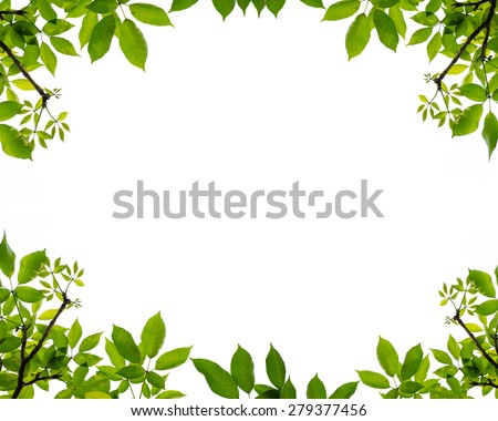tree leaf frame on white background - stock photo