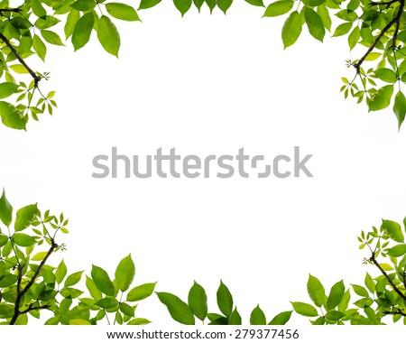 tree leaf frame on white background - stock photo