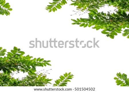 Tree leaf isolated on white background, Green leaves on white background.