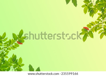 tree leaf on nature background