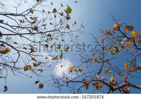 tree leaf sky - stock photo