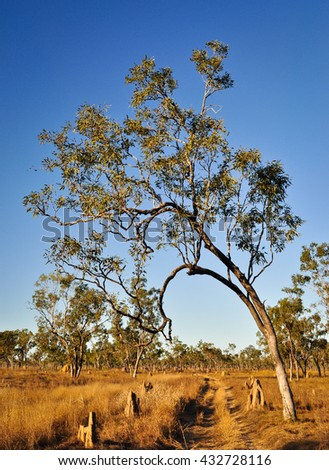 Tree leaning over dirt track with termite mounds in bushland outback of Northern Territory Australia - stock photo