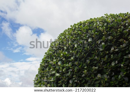 Tree leaves and cloudy blue skye - stock photo
