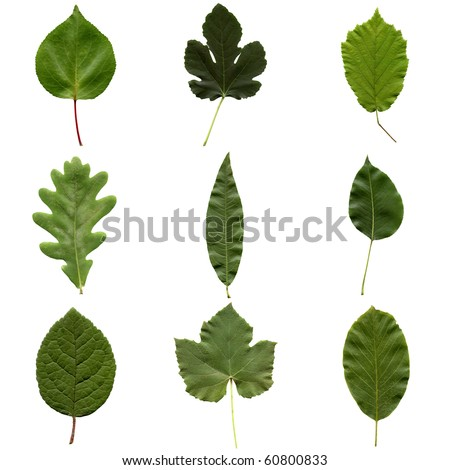 Tree leaves collage - isolated over white background - front side