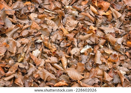 Tree leaves on the ground and dry in autumn.