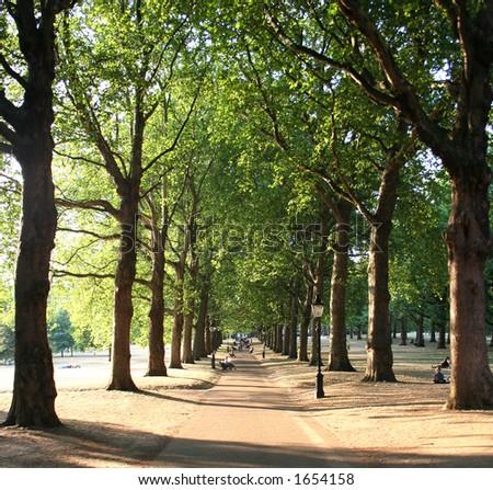 Tree-lined path (Green Park, London) - stock photo