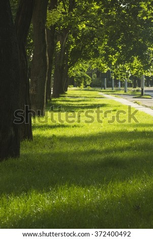 Tree Lined Pathway through a Beautiful Leafy Green Park - stock photo