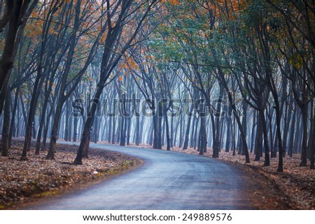 tree lined road (rubber plantation) in Binh Phuoc, Vietnam. - stock photo