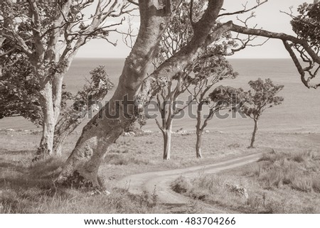 Tree Lined Road to Murlough Beach; County Antrim; Northern Ireland in Black and White Sepia Tone