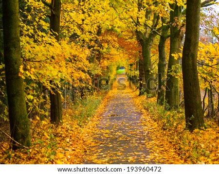 tree-lined walk in autumn - stock photo