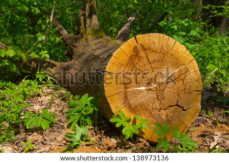 tree log in a forest - stock photo