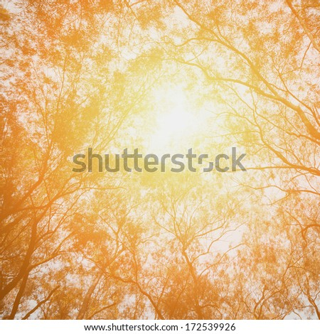 tree look up with sun light background - stock photo