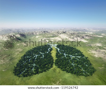 Tree looks like lungs - stock photo