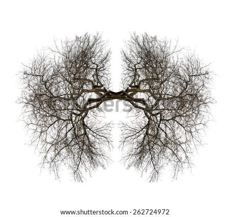 tree lungs isolated on white - stock photo