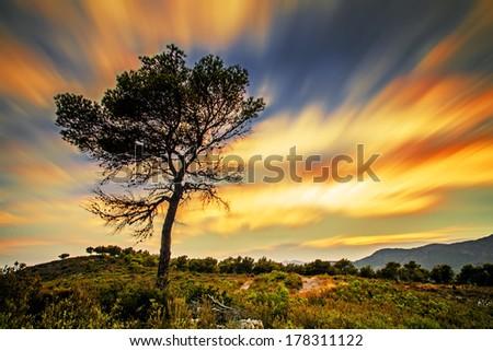 Tree, moving sky on background - stock photo